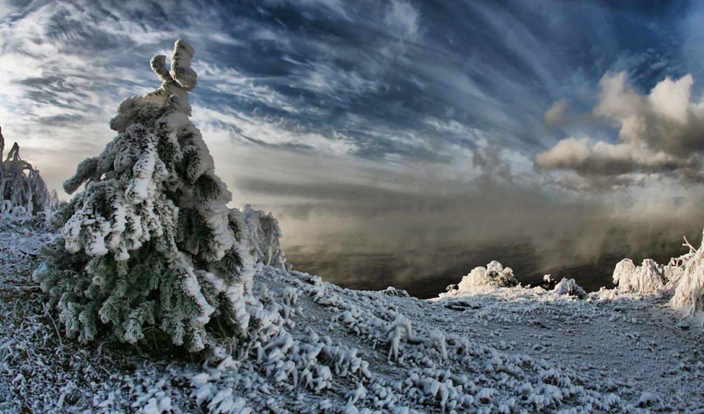 winter, чудесный, день, солнце, мороз, season, doğanın, keyfini, ddgroup, rus, trees, çıkarın,