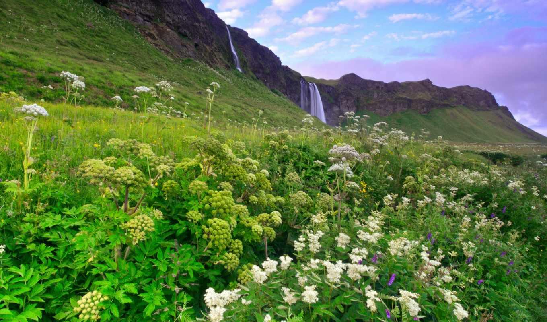 исландия, горы, холмы, цветы, трава, утро, зелень, сиреневое, водопад, облака, небо,