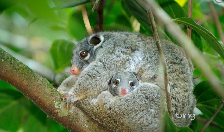австралия, animals, you, но, об, наши,