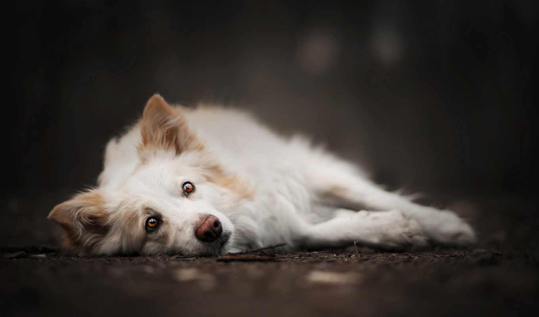 собака, картинка