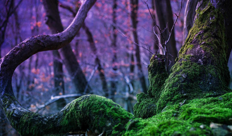 природа, мох, лес, деревья, дерево, магия,