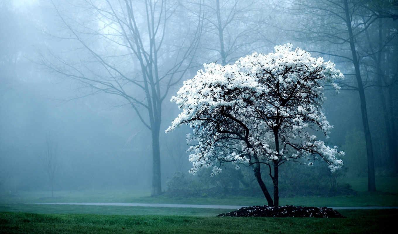 флот, нов, туман, цветет, дерево,