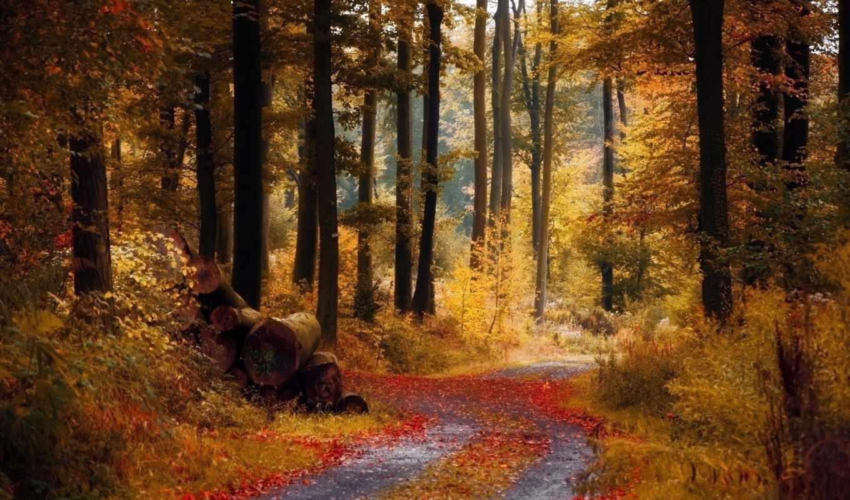осень, лес, леса, nat, осенняя,
