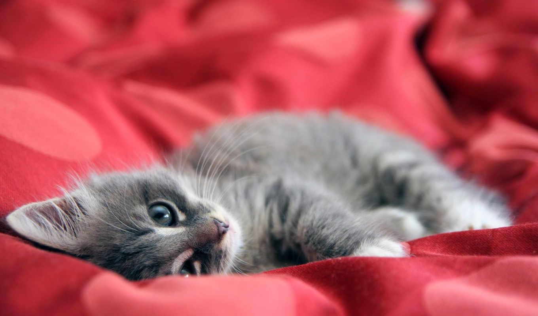 широкоформатные, красивые, бесплатные, разрешением, котенок, кошки, котята,