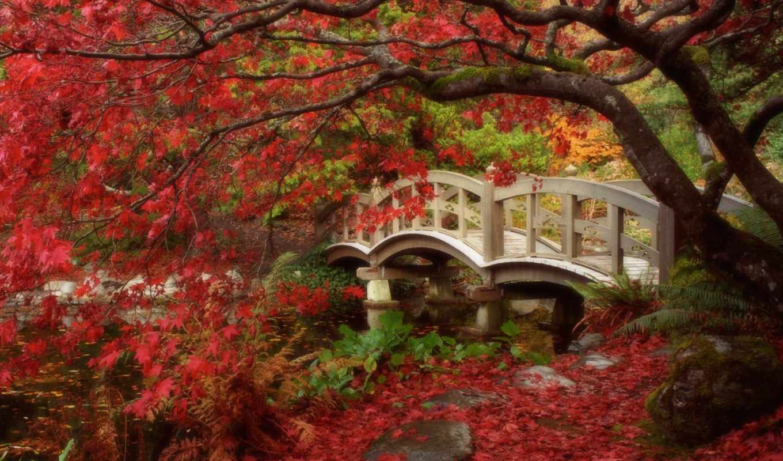 japanese, garden, gardens, ideas, мост, seattle, design, gov, backyard,