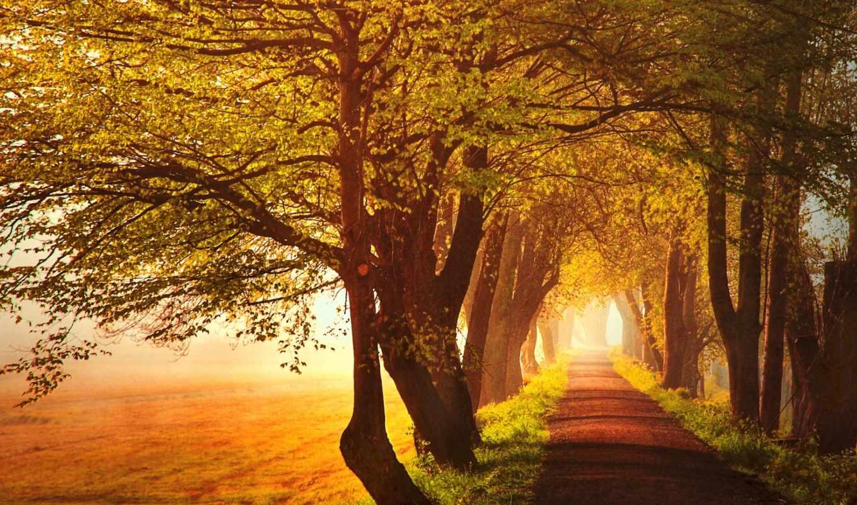 аллея, деревья, осень, дорога, туман, природа, дороги,