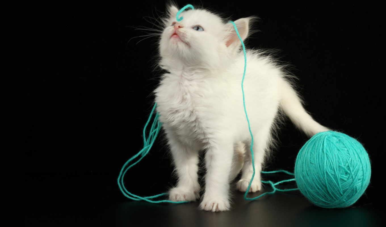 кошки, котенок, кот, black, клубком, ниток, white, мяч,