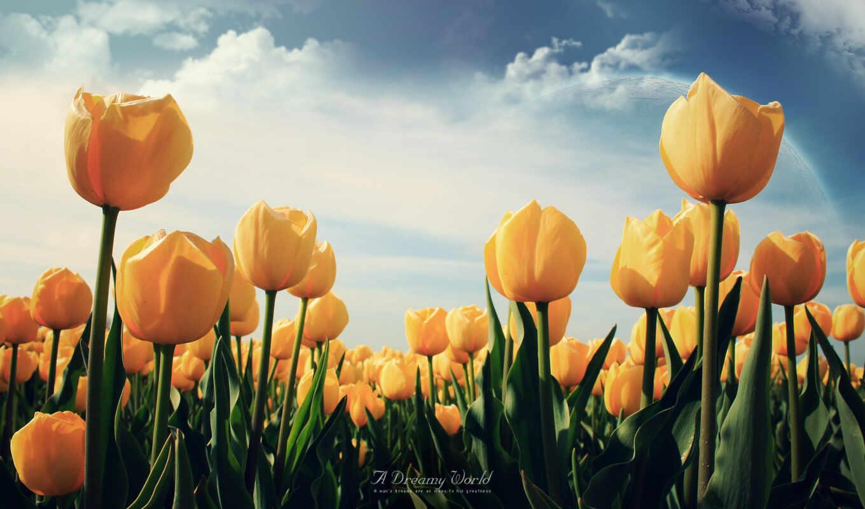 цветы, тюльпаны, лепестки, желтые, красивые, поле,