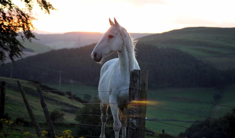 природа, apple, iphone, лошадь, закат, планшетный, лошади, забор, zhivotnye,