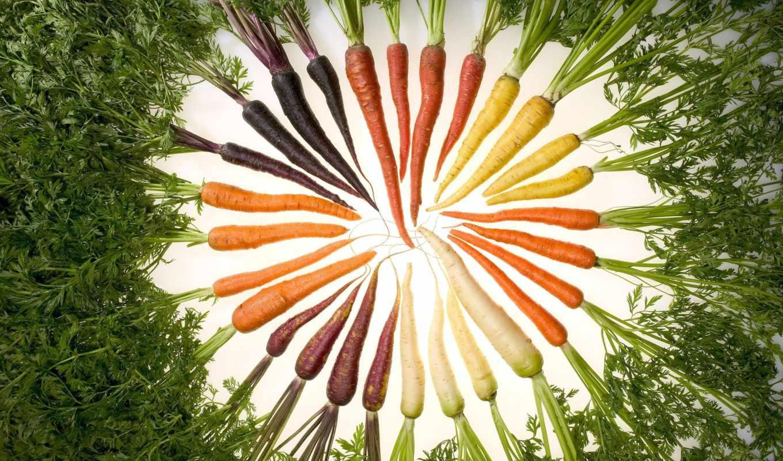 морковь, полезные, свойства, моркови, полезных,