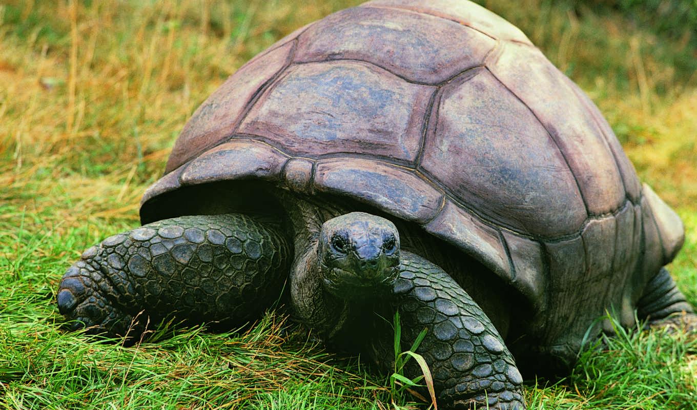 animal, planet, картонный, рисования, дизайна, coated, action, черепахи, мм, коллекциях,