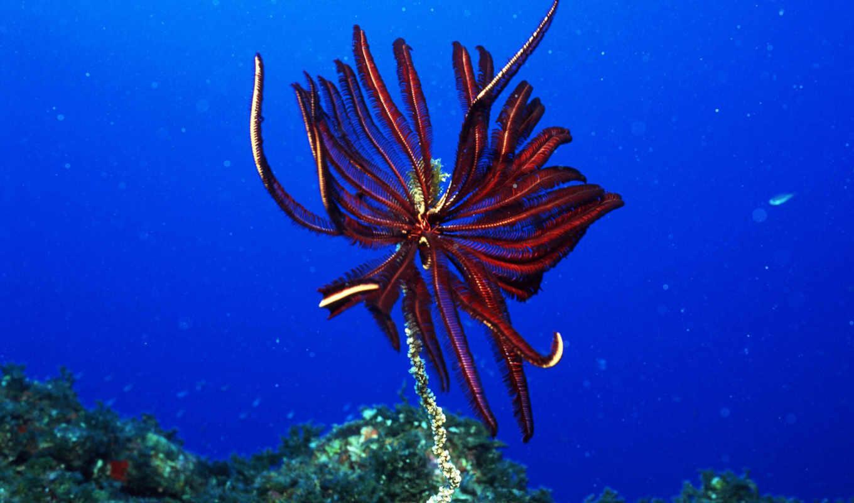 underwater, world, animals, under, red, water, sea,