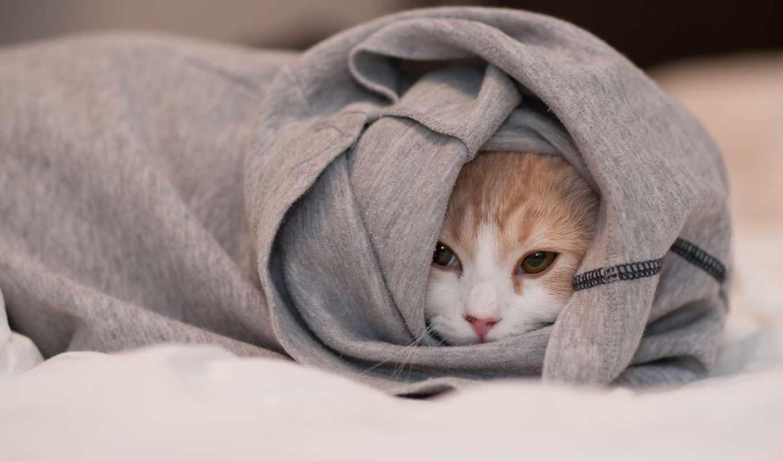 спряталась, одежда, кошка, torode, ben, hannah, морда, картинка,