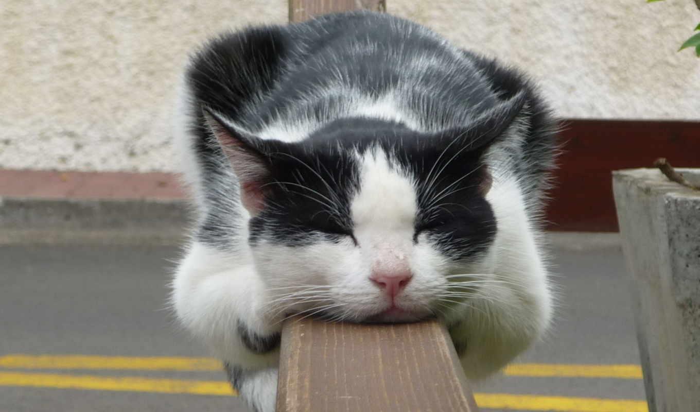 кот, white, перило, чёрно, спит,
