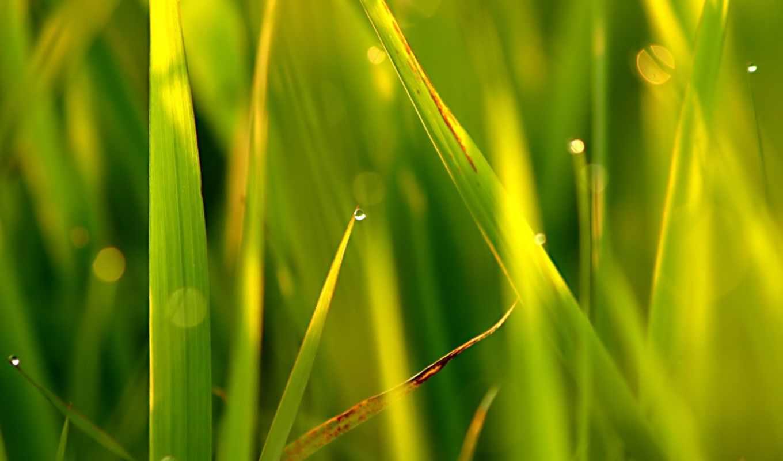 картинку, telefon, mobilnogo, телефона, бесплатную, растения, son, размером, трава,