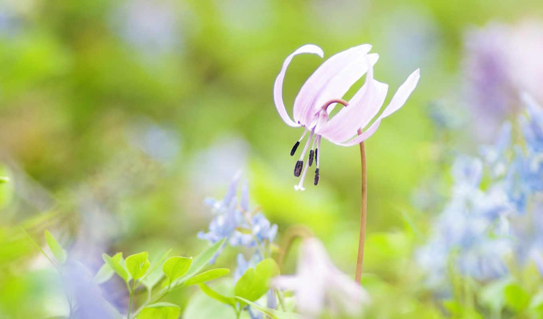 priroda, красивые, фотографий, люди, makro, розовый, цветок,