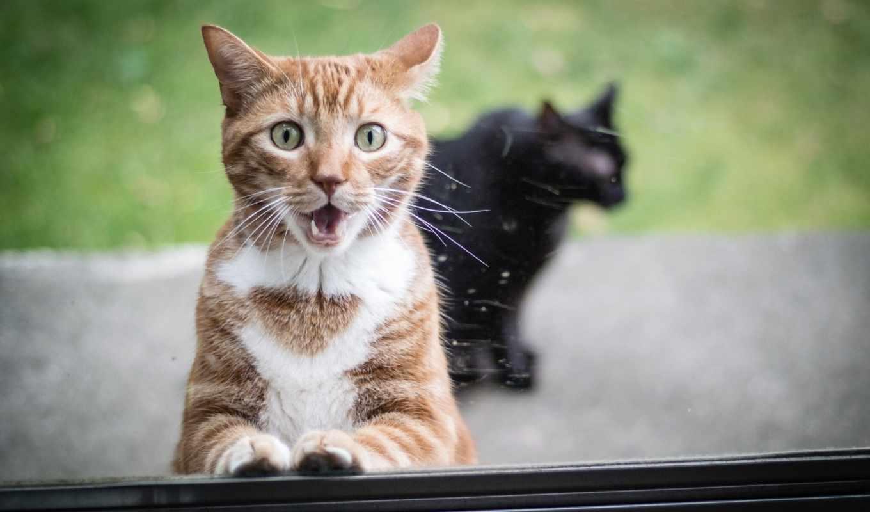 red, кот, они, animal, удивление,