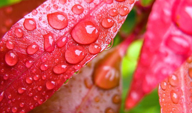 ecran, природа, fond, листва, fonds, gratuit,