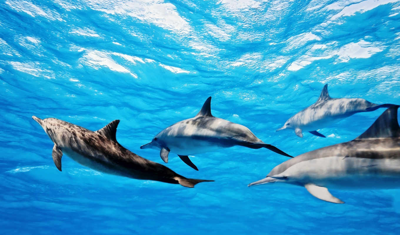 дельфины, водой, дельфинах, следы, фотообои, интересные, поддерживают, со, захлебнулись, они, малышей,