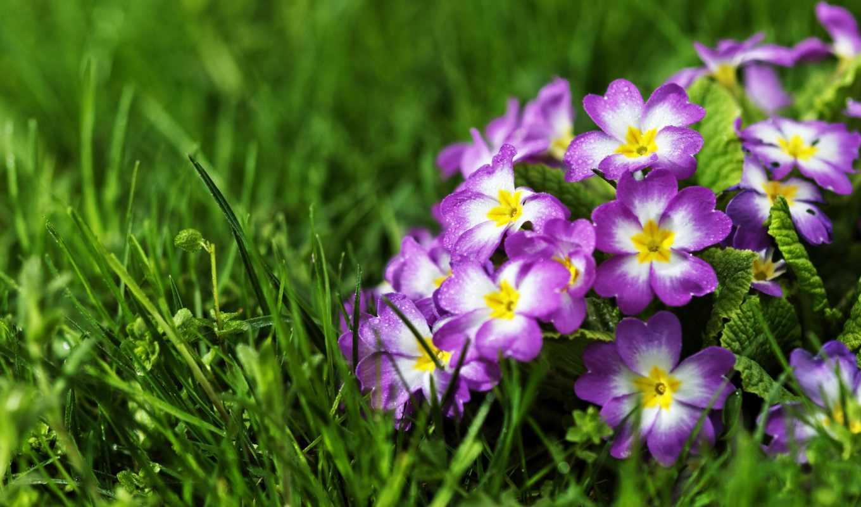 цветы, flowers, nen, hinh, iphone,