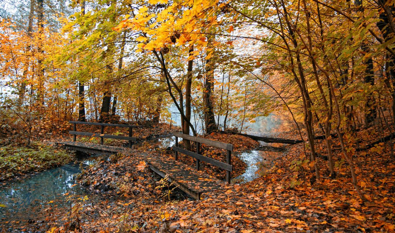 осень, природа, времена, года, листья, мост, флот,