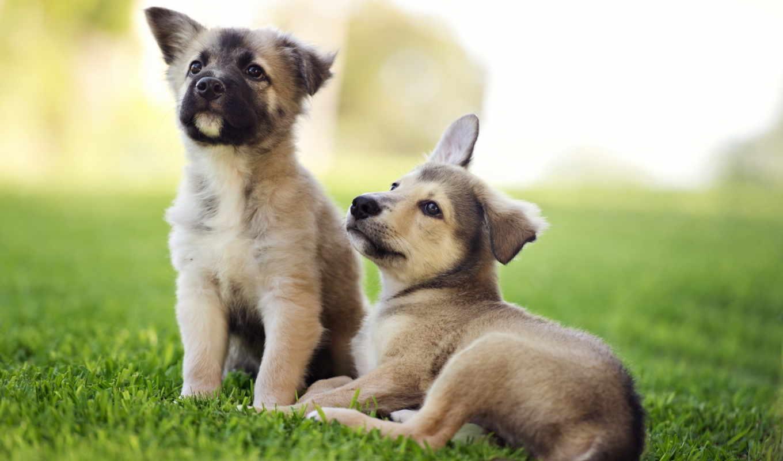страница, щенок, cute, милые, коллекция, лучшая, уже, zhivotnye, загружено, природа,