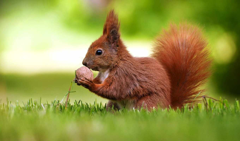 протеин, караоке, sing, want, птица, ответить, орешек, ребенок, орех