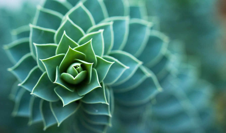 макро, природа, растение, маленький, цветок, желтый,