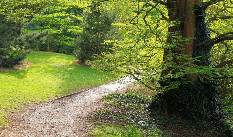 парк, дорожка, лес, зелень, поляна,