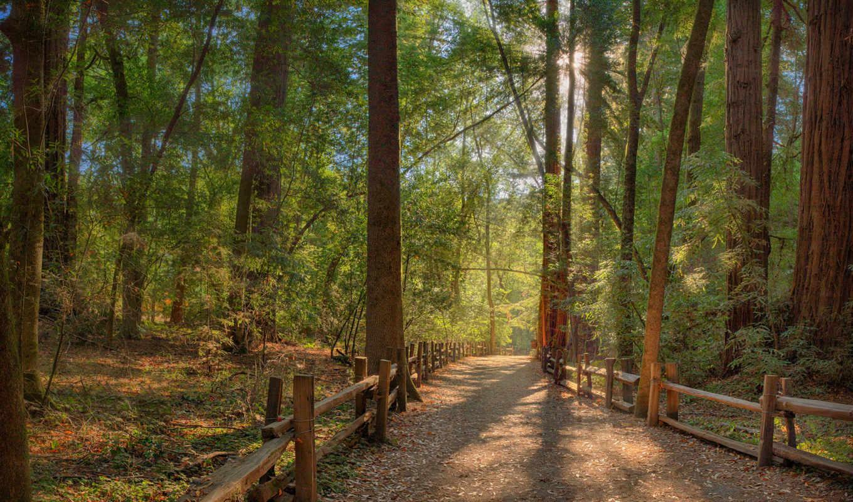 park, state, henry, redwoods, cowell, you, можно, photos,