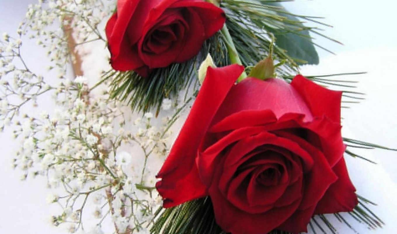 ,flowers, розы, цветы, красные,