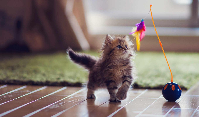 gatos, juguetes, los, para, que, gato, con, jugar, сено, jugando,