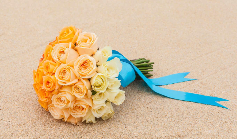 розы, stock, цветы,