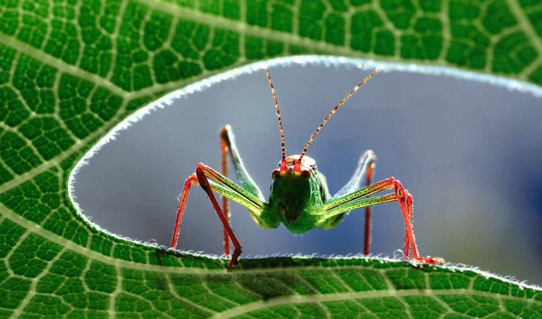 insectos, fotos, imagenes, compartir, fondos, los, twittear, animales, imágenes,