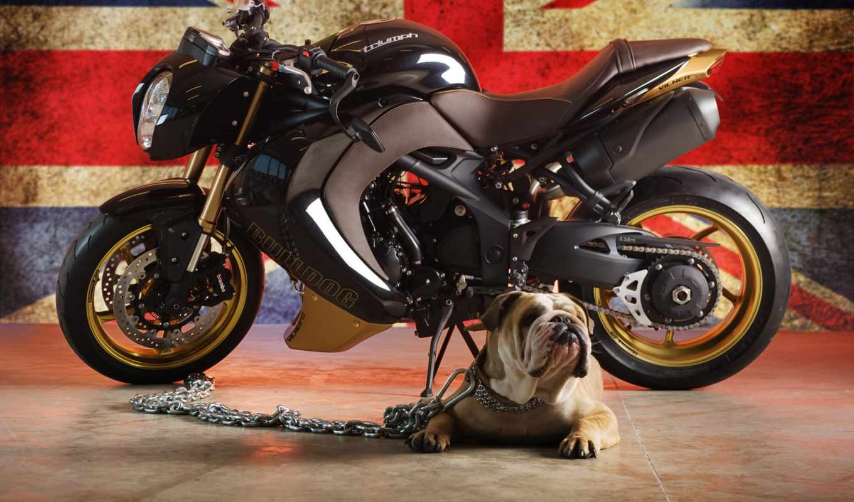 мотоцикл, бульдог, triumph, vilner, версии, представил,