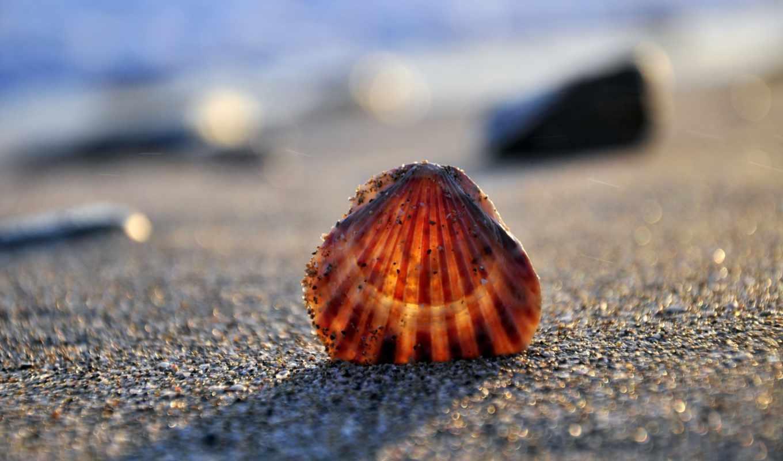 shell, берег, море, песок, пляж, взгляд,