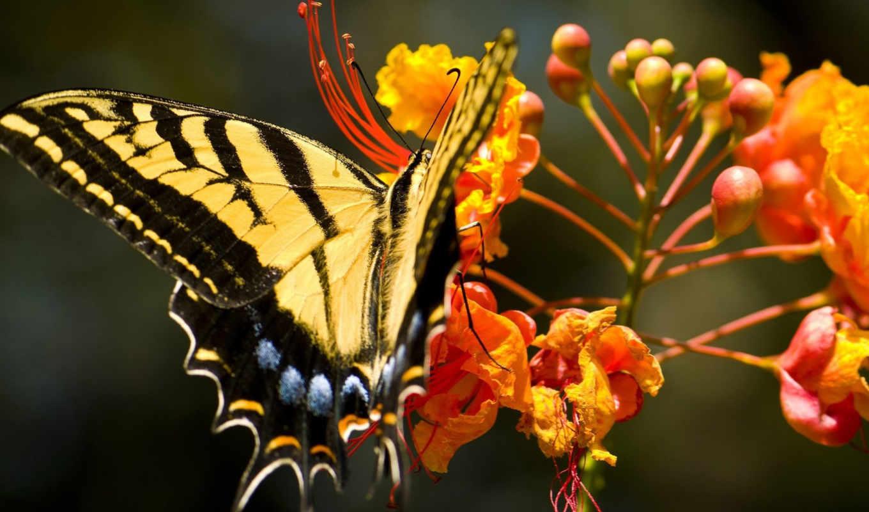 бабочка, красивая, природа, цветке, сидит, картинка,