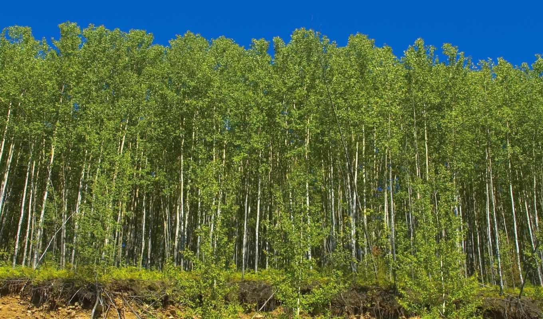 пейзажи -, сибири, лес, июл, views,