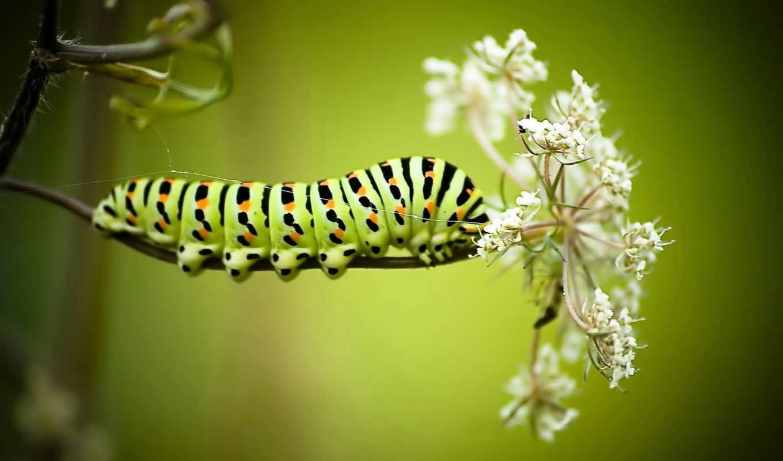 борьбы, производить, открытом, другими, насекомые, выращивание, способны, методы, гусеницами, травоядные,