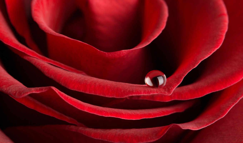 розы, красивые, рози, нота, заказать, есть,