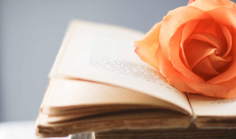 книга, роза, страница