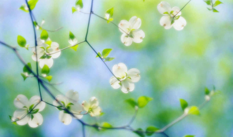 цветы, макро,