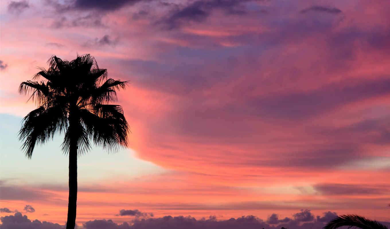 tenerife, краски, закат, palm, небо, oblaka, розовый,
