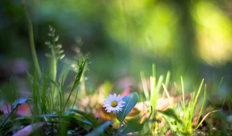 трава, украины, яndex, погоды, forecast, полевые, макросъемка, pinterest, природа, июня,