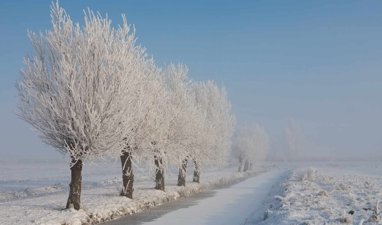 иней, зима, снег, пейзаж, природа, деревья, картинка,