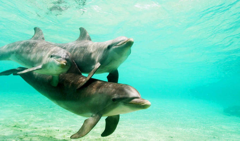 дельфины, дельфин, за, водой, под,