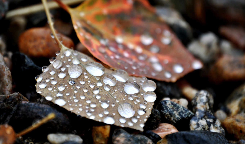 макро, листья, water,камни,осень,