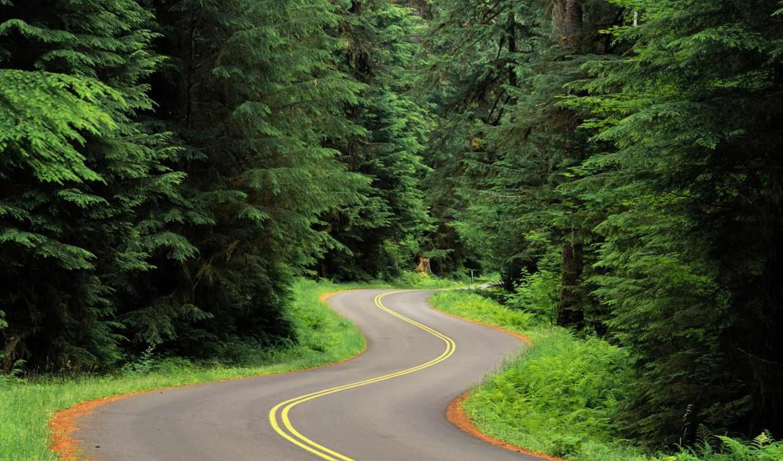природа, дорога, лесу, лес, природы,