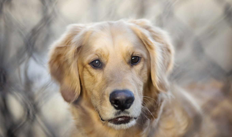 собак, dogs, animals, животных, мар,