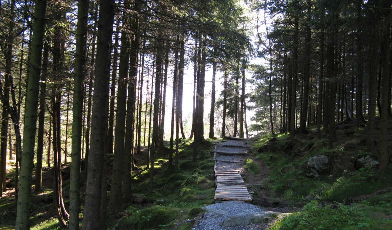 лес, норвегии, норвегия,